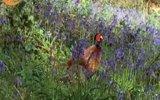 Av Tüfekleri view on izlesene.com tube online.