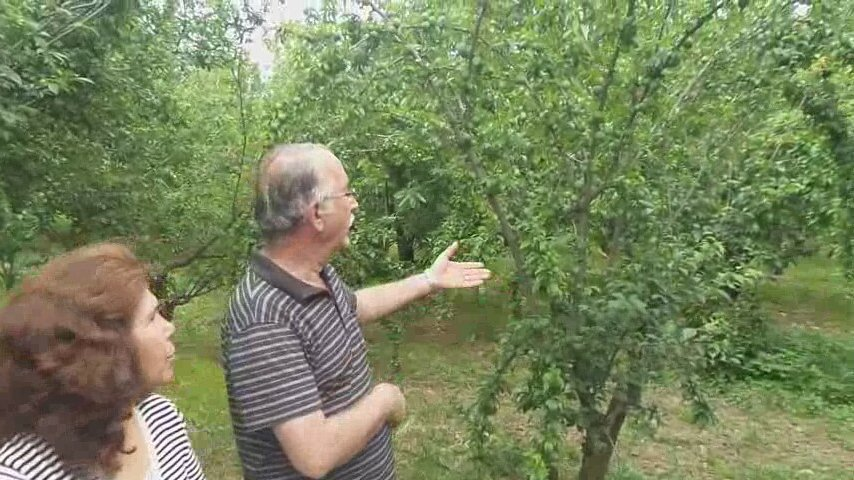 İrem Candar Erik Ağacı