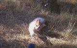 Yuvasız Kedicik