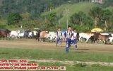 Maç sırasında sahaya inekler girdi