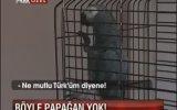 Papağan Efe - Ne Mutlu Türküm Diyene Şampiyonda Beşiktaş