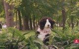 Oyuncak Köpekle Köpekleri Şakalamak